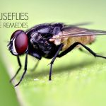 16 Home Remedies to Get Rid Of House Flies