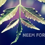 How Effective is Neem for Acne? (No. 1 and 5 is Best)