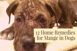 Home Remedies For Manage In Dogs