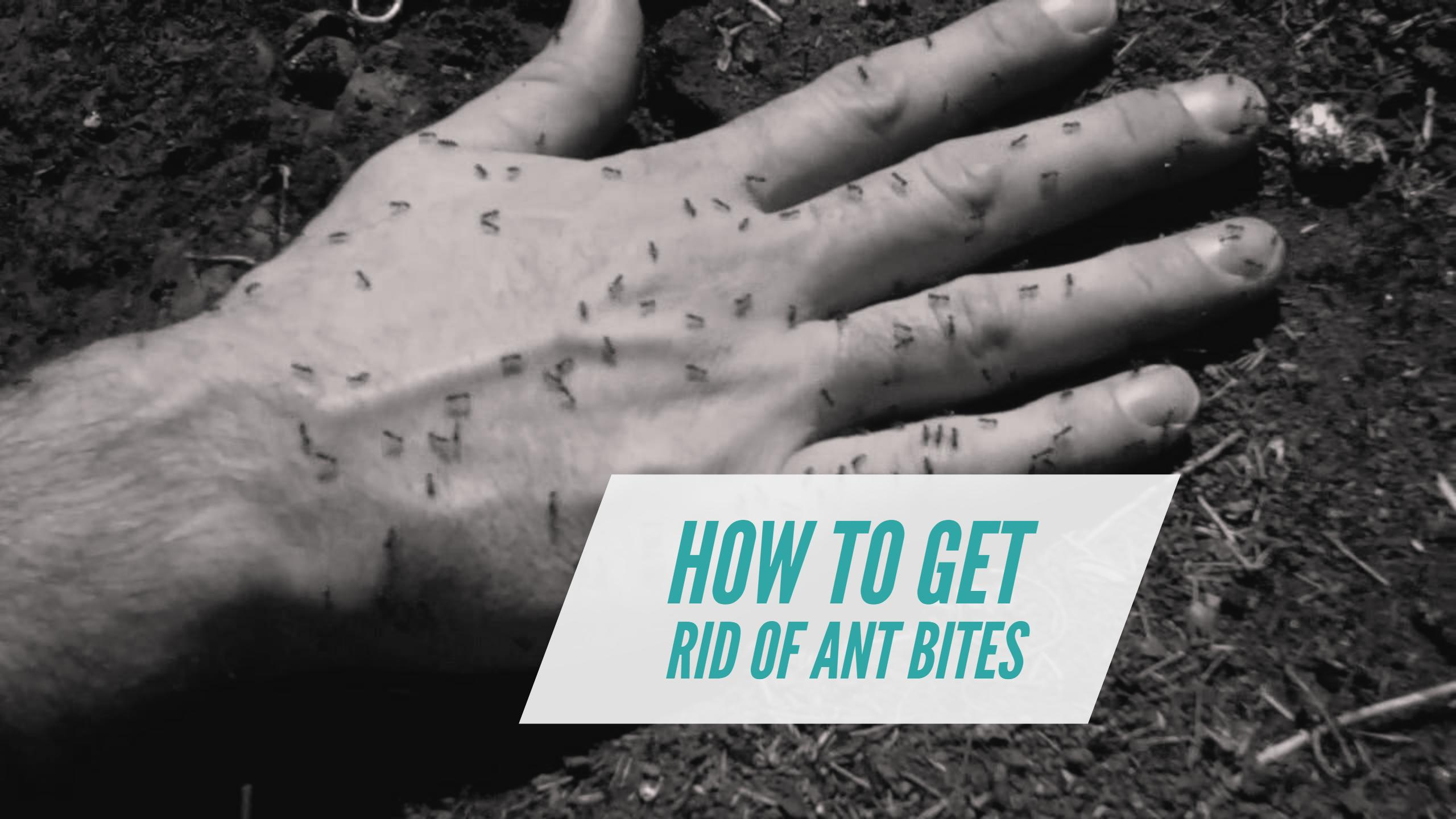 How To Get Rid Of Ant Bites: 12 Effective Ways