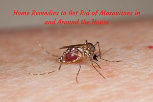 Home Remedies ForMosquitoes