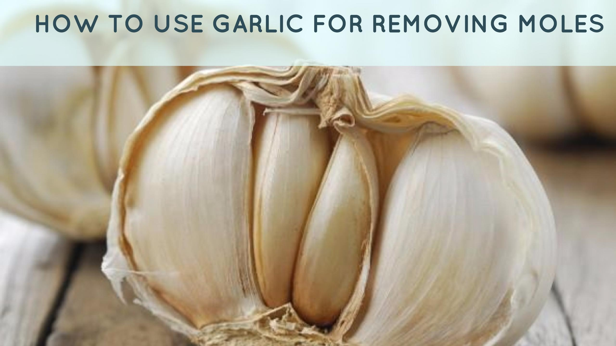 Garlic For Moles