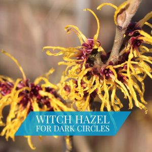 Witch Hazel For Dark Circles