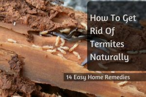 Superb Get Rid Of Termites Design