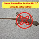 12 Home Remedies To Get Rid Of Lizards Infestation