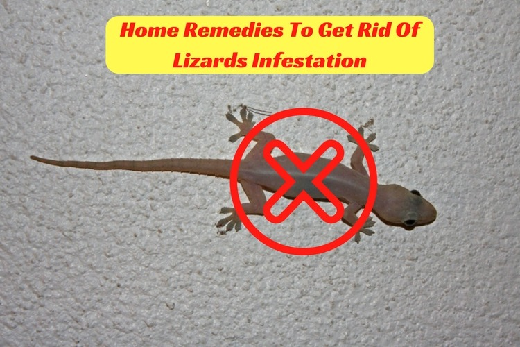 Home Remedies For Lizards Infestation