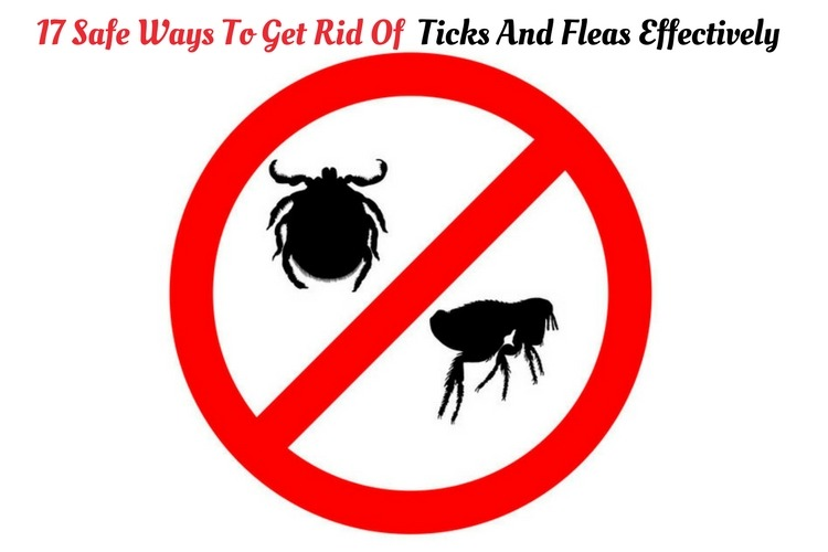 Home Remedies to Get Rid of Ticks and Fleas