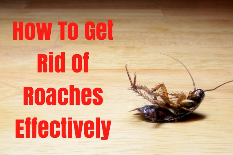 Natural Ways To Get Rid Of German Cockroaches