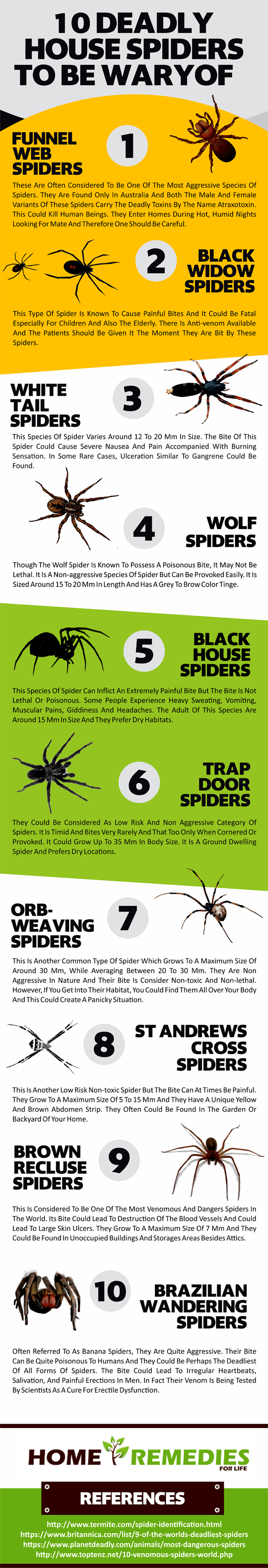 BEWARE Deadly House Spiders To Be Wary Infographic