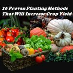 10 Proven Planting Methods That Will Increase Crop Yield