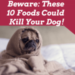 Beware: These 10 Foods Could Kill Your Dog!