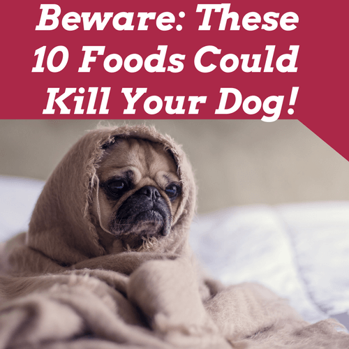 how to kill your dog