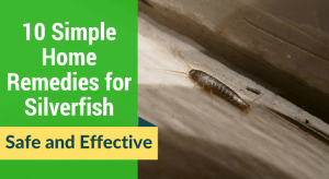 10 Simple Home Remedies for Silverfish(1)