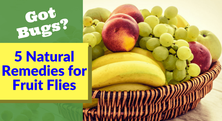 5 Natural Remedies for Fruit Flies