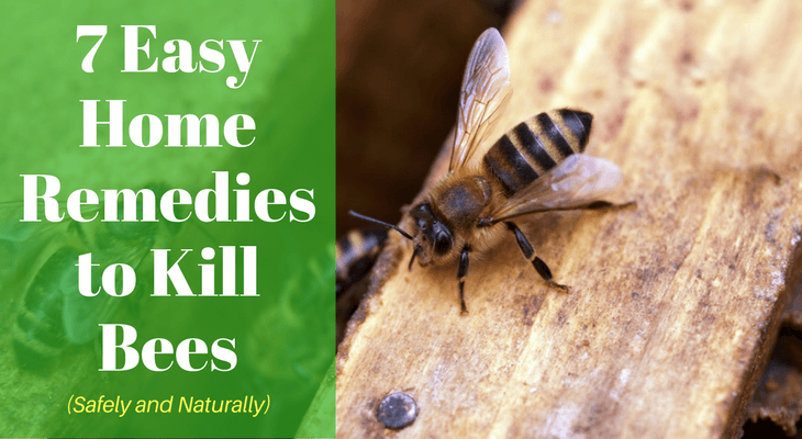 7 Easy Home Remedies to Kill Bees