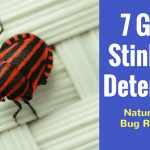 7 Great Stink Bug Deterrents(1)