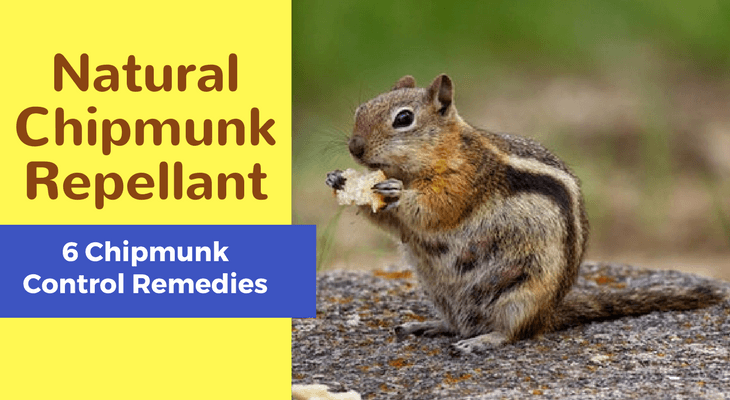 Natural Chipmunk Repellant