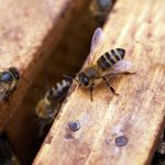 7 Easy Home Remedies to Kill Bees (Safely and Naturally)