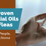 10 Proven Essential Oils For Fleas (Safe for People, Pets and Home)