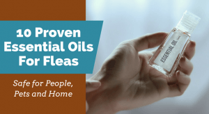 10 Proven Essential Oils For Fleas