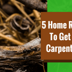 5 Home Remedies To Get Rid Of Carpenter Ants