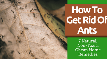 How To Get Rid Of Ants (7 Natural, Non-Toxic, Cheap Home Remedies)