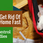 How To Get Rid Of Rats At Home Fast (5 Rat Control Remedies)