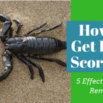 How To Get Rid of Scorpions (5 Effective Home Remedies)