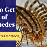 How to Get Rid of Centipedes (10 All-Natural Methods)