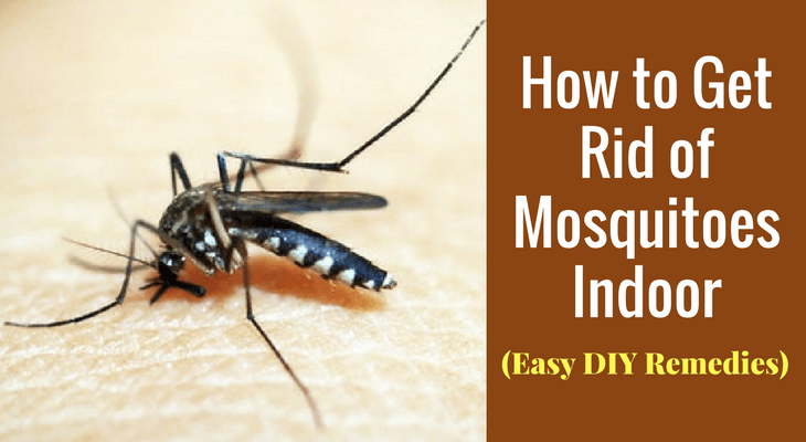 How To Get Rid Of Mosquitoes Indoor Easy Diy Remedies