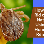 How to Get Rid of Ticks Naturally Using Safe Homemade Remedies
