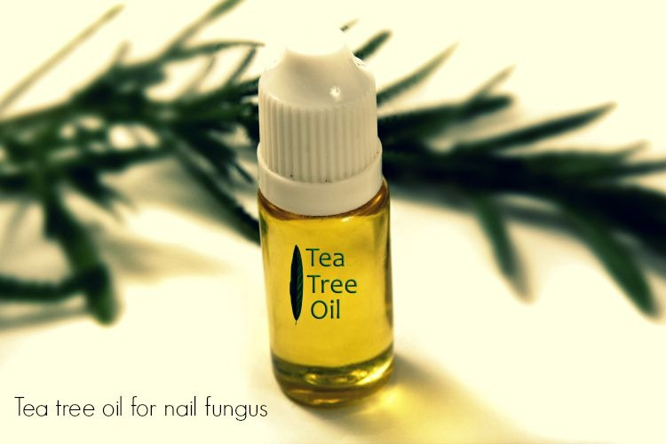 tea tree oil for nail fungus