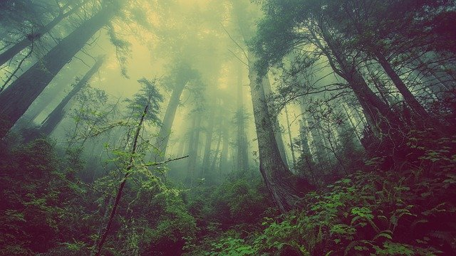 forest-greenery